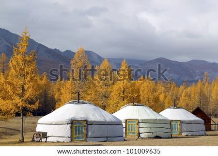Ger camp at Khovsgol Lake in autumn colors, Northern Mongolia