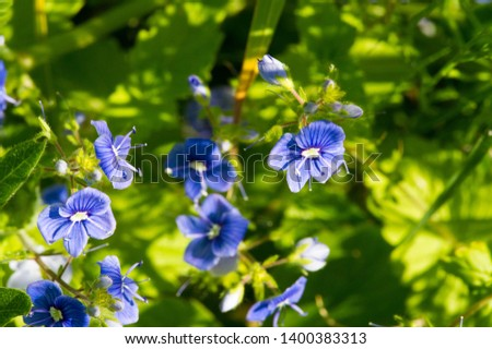 Geranium pratense, the meadow crane's-bill or meadow geranium, is a species of flowering plant in the family Geraniaceae, native to Europe and Asia. saucer-shaped blooms of pale violet. #1400383313