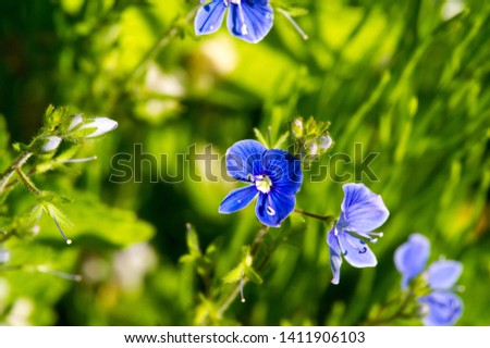 Geranium pratense, the meadow crane's-bill or meadow geranium, is a species of flowering plant in the family Geraniaceae, native to Europe and Asia. saucer-shaped blooms of pale violet. #1411906103