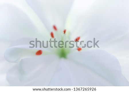 Geranium stamens white flower closeup. White geranium flower macro. Petals and stamens of geraniums macro. White flower close up.