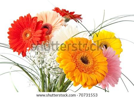 Gerbara daisy bouquet over white background