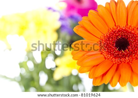 Gerber Daisy with other flowers isolated over white background