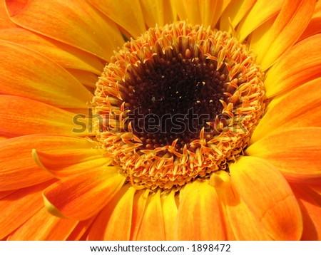 Gerber flower detail #1898472