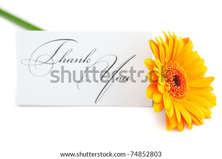 gerbera and a card signed thank you isolated on white