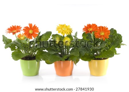 Комнатные растения ученический