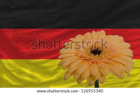 gerbera daisy flower and national flag of germany as concept and symbol of love, beauty, innocence, and positive emotions