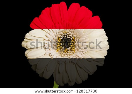 gerbera daisy flower in colors national flag of egypt on black background as concept and symbol of love, beauty, innocence, and positive emotions