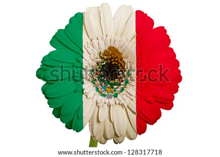 gerbera daisy flower in colors national flag of mexico on white background as concept and symbol of love, beauty, innocence, and positive emotions