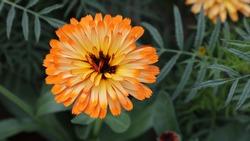 Gerbera Flower in Rajghat - Delhi
