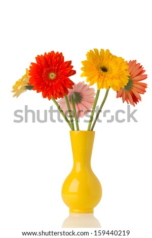 Gerbera flower on the vase, isolated white background. #159440219