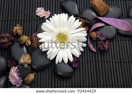 gerbera flower with flower dried petals and zen stone