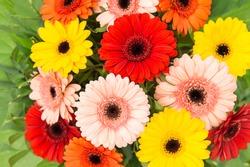 Gerbera flowers bouquet. Floral background. Red, yellow, pink, orange flower heads