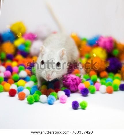 Gerbil and clourful balls