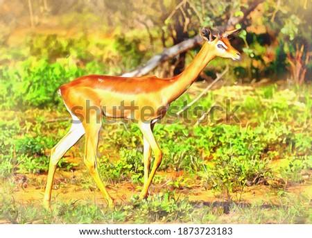 Gerenuk colorful painting looks like picture, Samburu National Reserve, Kenya. Stok fotoğraf ©