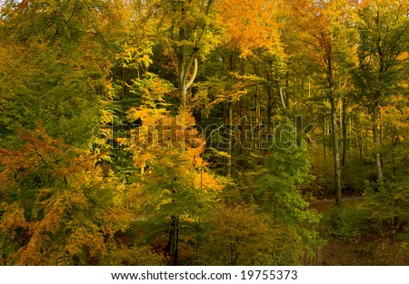stock-photo-german-beech-forest-shining-in-autumn-colors-19755373.jpg