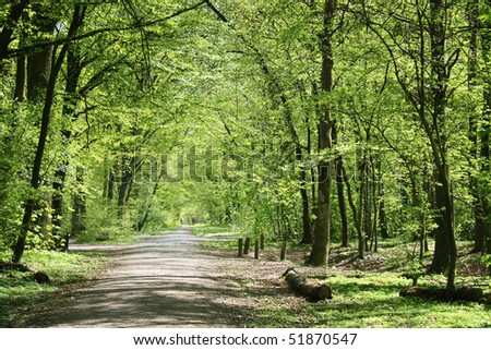 german forest in spring