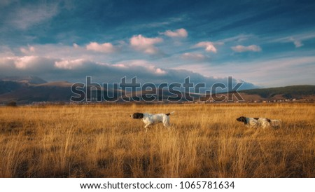 German pointer and English setter in hunting together #1065781634