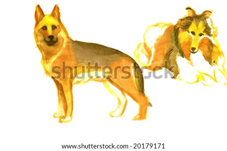 German shepardess and Colly on a white background