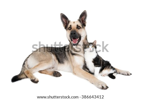 German Shepherd (crossbreed) and cat in a friendly pose. Isolated on white.