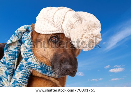 German shepherd dog wearing winter hat and scarf with blue sky background.
