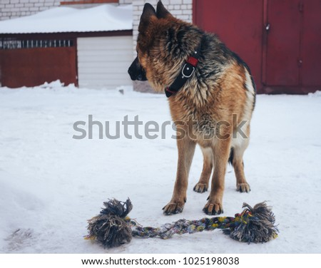 German Shepherd in the game #1025198038