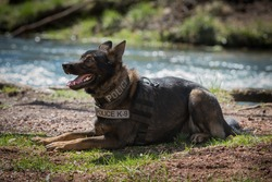 German Shepherd police dog  lays by the water.