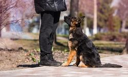 German shepherd puppy in training with dog trainer instructor