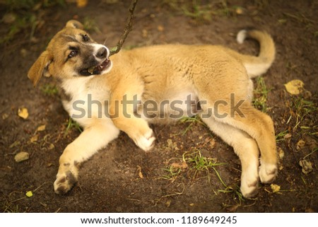 german shepherd puppy lay on green grass lawn with human hand stroke him #1189649245