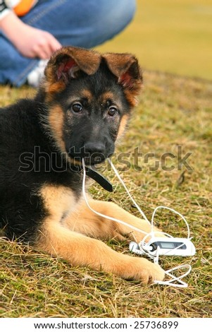 German shepherd puppy playing with an mp3 player