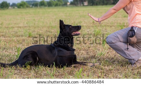 german shepherd training  sit...