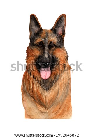 German Shepherd.Watercolor hadndrawn portraitof a dog isolted on white background. Stock photo ©