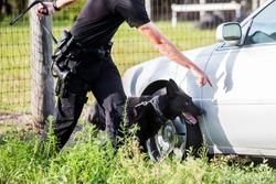 German Shepherd working dog, police K9 unit black shepherd finding drugs narcotics, policeman handler in uniform training canine, searching vehicle