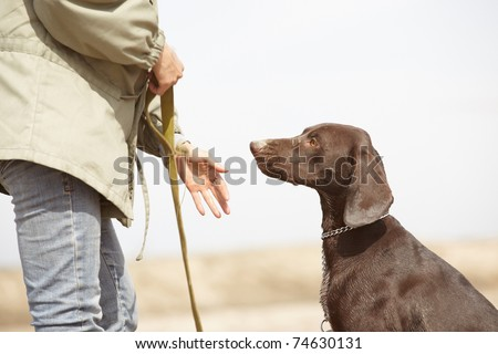 German short-haired pointer Kurzhaar and trainer outdoors. Natural light and colors