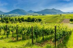 German vineyard landscape in summer, Rhineland-Palatinate, Germany. Deutsche Weinstrasse (German Wine Road) Vineyards Palatinate region