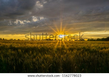 Germany, Dawning warm orange sunrays and light over corn fields #1162778023