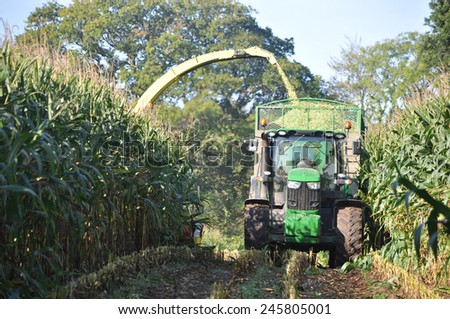 Germany - Schleswig Holstein - October 10, 2014: Corn crop for biogas energy