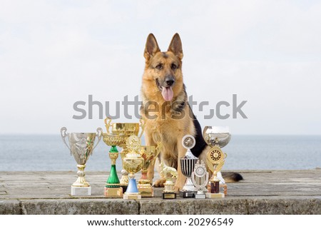 Germany shepherd with awards