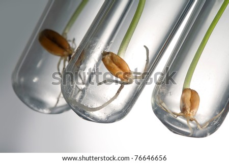 germinate seed in test tube