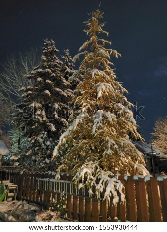 getting a night pic of the trees and snow