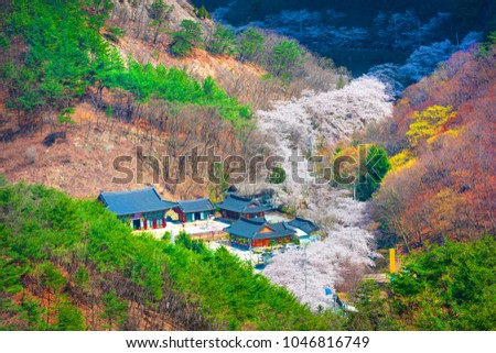 Geumdangsa temple and cherry blossom at Jinan,South Korea #1046816749