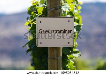 Gewurztraminer wine grape variety sign on wooden pole selective focus, vineyard varieties signs, Okanagan valley wine region British Columbia, Canada