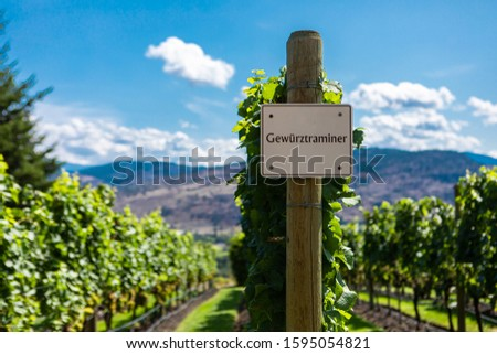 Gewurztraminer wine grape variety sign on wooden vertical end post, vineyard varieties signs, Okanagan valley wine region British Columbia BC, Canada