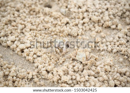 Ghost crabs are of the genus Ocypode, common shore in many countries. dominate sandy shores in tropical and subtropical areas. Like living in the hole. #1503042425