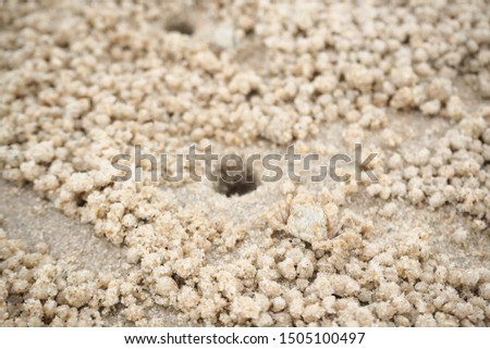 Ghost crabs are of the genus Ocypode, common shore in many countries. dominate sandy shores in tropical and subtropical areas. Like living in the hole. #1505100497
