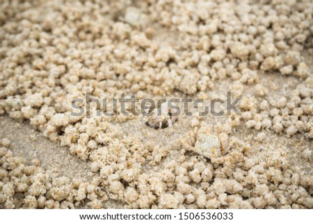 Ghost crabs are of the genus Ocypode, common shore in many countries. dominate sandy shores in tropical and subtropical areas. Like living in the hole. #1506536033