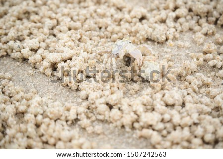 Ghost crabs are of the genus Ocypode, common shore in many countries. dominate sandy shores in tropical and subtropical areas. Like living in the hole. #1507242563