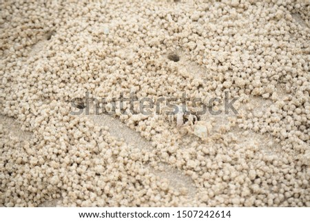 Ghost crabs are of the genus Ocypode, common shore in many countries. dominate sandy shores in tropical and subtropical areas. Like living in the hole. #1507242614