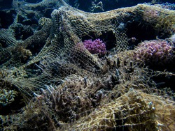 Ghost Net on Coral Reef Close Up