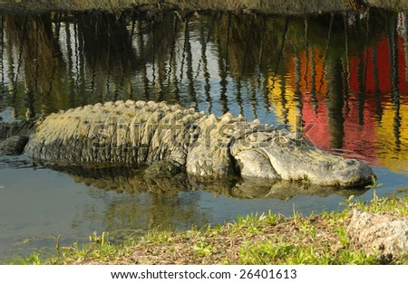 Giant Alligator in Florida Lake