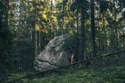 Giant boulder in late fall mossy forest. Sun shines through the frozen pines at the northern Russian forrest.